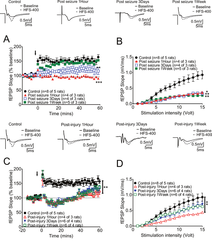 Long-term synaptic plasticity of hippocampal CA3-CA1 Schaffer collateral synapses was affected either by KA-induced seizures or fluid percussion injury alone, and these changes varied at different recording times.