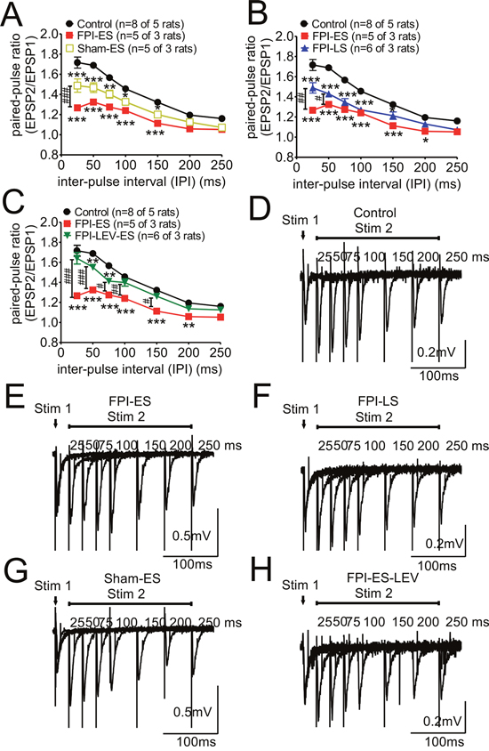 Paired-pulse stimulation responses, impaired in the post-FPI seizure animals, could be partially reversed by prophylactic administration of LEV.