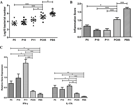 P5 (inosine 5ʹ-monophosphate dehydrogenase, IMPDH), P10 (type II citrate synthase, CS II), and P11 (urease subunit beta, UreB) each had better protection against H. pylori challenge than the PC05 component.