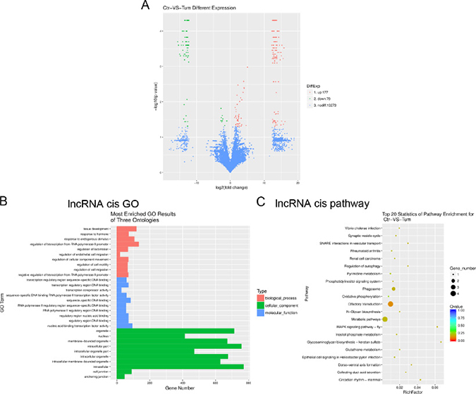 Gene ontology (GO) terms and pathways for target mRNAs of differentially expressed lncRNAs between infantile hemangioma and adjacent normal skin tissues.
