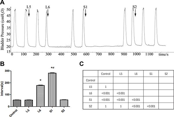 Effect of DRT stimulation on bladder reflex contraction (BRC).