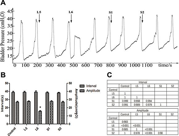 Effect of VRT stimulation on bladder reflex contraction (BRC).