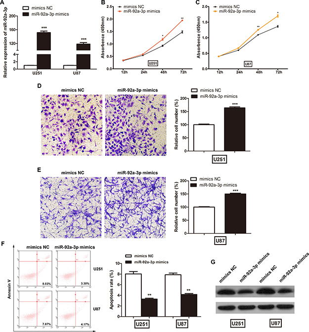 miR-92a-3p promoted glioma cell proliferation