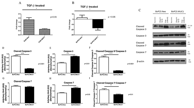 MUC1 overexpressing cells resist apoptosis in response to treatment with TGF-β1 with corresponding decrease in cleaved caspase 3 when compared to MUC1 low expressing cells.