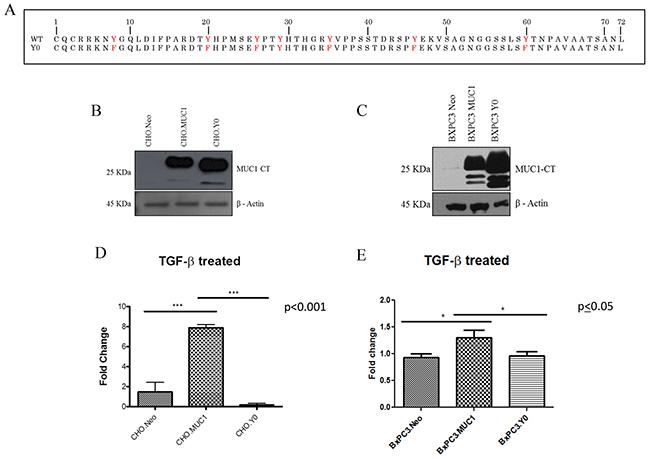 TGF-β1 mediated invasiveness is dependent upon signaling through the tyrosines in MUC1-CT.