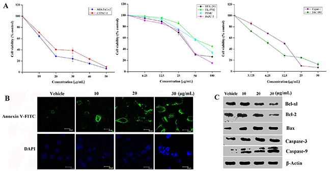 Spiclomazine suppresses cancer cell survival.