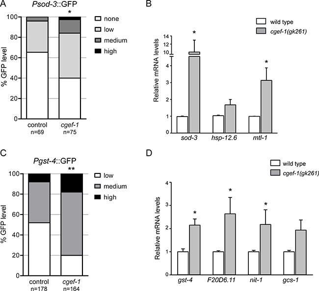 Inhibition of cgef-1 induces DAF-16 and SKN-1-mediated transcription.