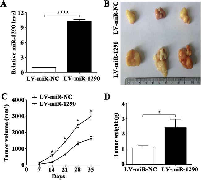 miR-1290 promotes tumor growth in vivo.