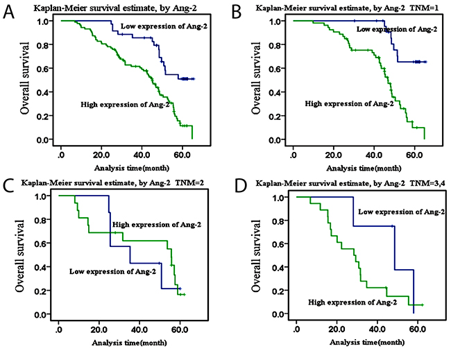 Kaplan-Meier survival curves of Ang-2 overexpressionThe survival curves of high Ang-2 expression in patients with lung cancer were made by the Kaplan-Meier method.