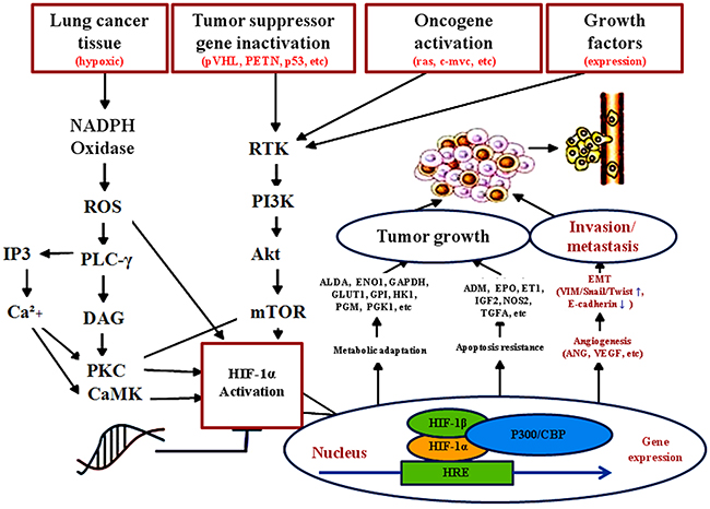 Possibility mechanism of tumor derived Ang-2 up-regulating EMT and facilitating lung cancer metastasis.