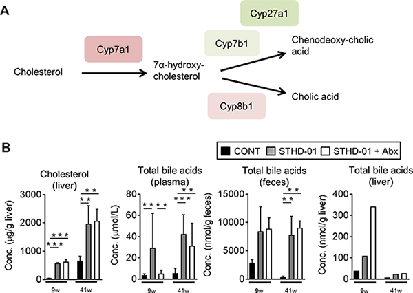 Bile acid synthesis from cholesterol was up-regulated upon the feeding of STHD-01.