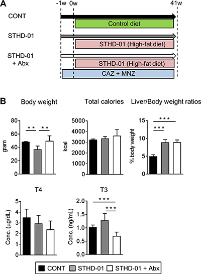 Body characteristics and enzyme-related metabolism changed after feeding of STHD-01.