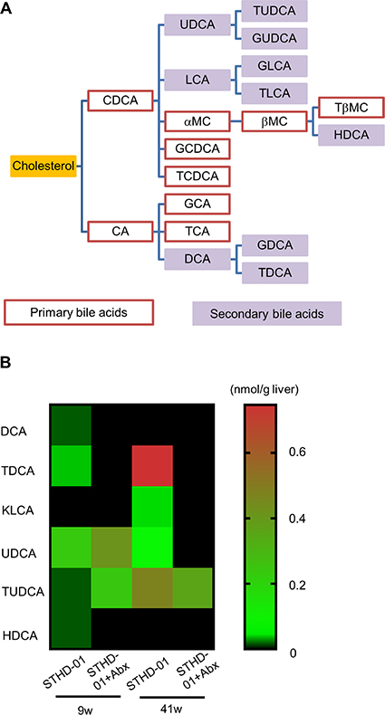 Abundance of secondary bile acids in the liver was regulated by the gut microbiota.