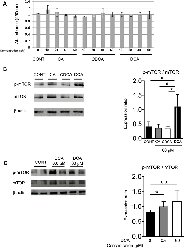 DCA activated the mTOR signaling in the HepG2 cells.