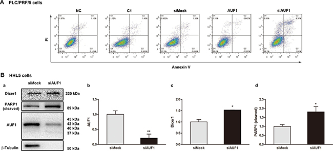 Inhibited expression of AUF1 promotes HCC cell death.