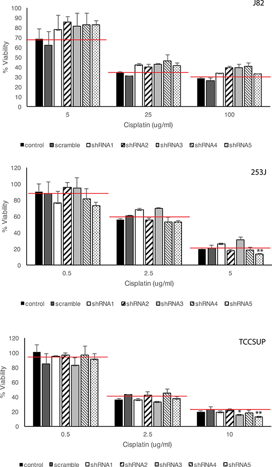 Effects of HSP27 knockdown on cisplatin-induced BC cell death.