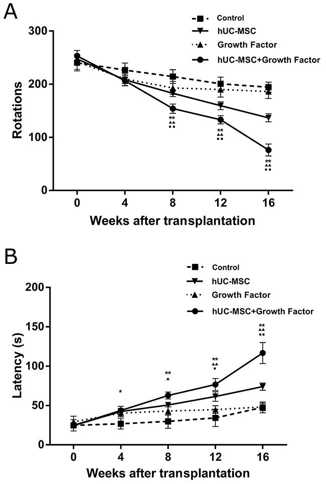 The progressive improvements on motor behaviors of 6-OHDA-lesioned rats with transplanted hUC-MSCs.