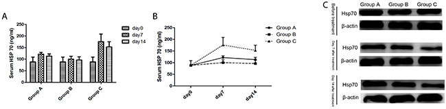 The Hsp70 levels of mice in three groups.