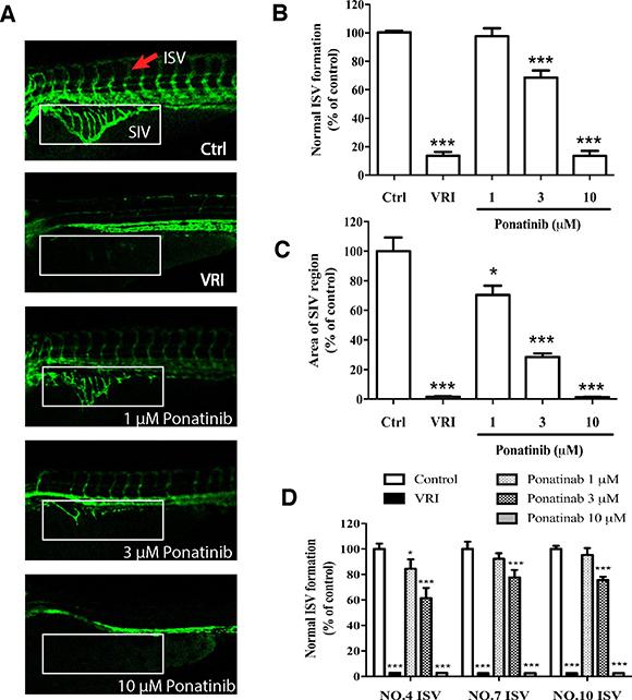 Effects of Ponatinib on vascular development of zebrafish larvae.