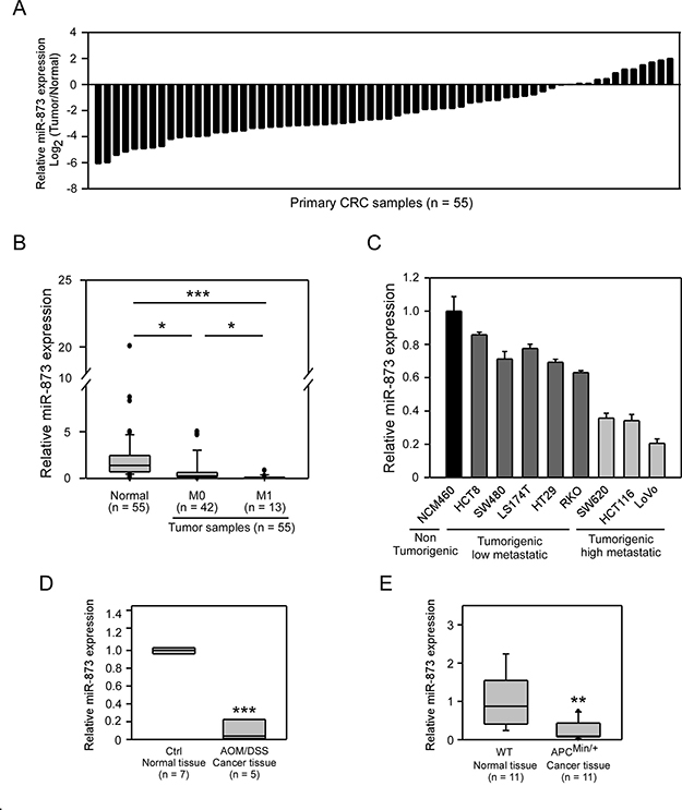 MiR-873 was downregulated in CRC clinical samples, mouse models and CRC cell lines.