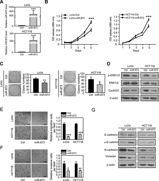 MiR-873 inhibits CRC cell proliferation, migration and invasion