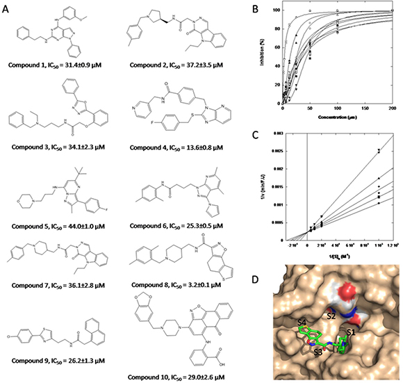 Structure of hits obtained through virtual screening and their inhibitory properties towards KLK7.