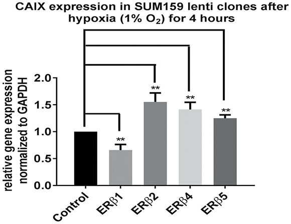 SUM159 cells expressing different ERβ variants were exposed to hypoxia 1% O2 for 4 hours.