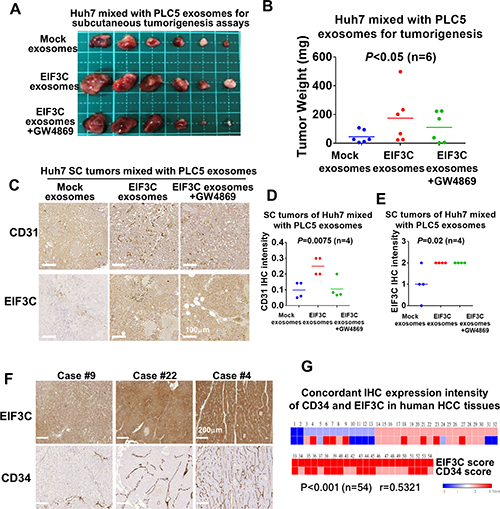 Various exosomes isolated from PLC5 mixed with Huh7 cells enhanced HCC angiogenesis and tumorigenesis.
