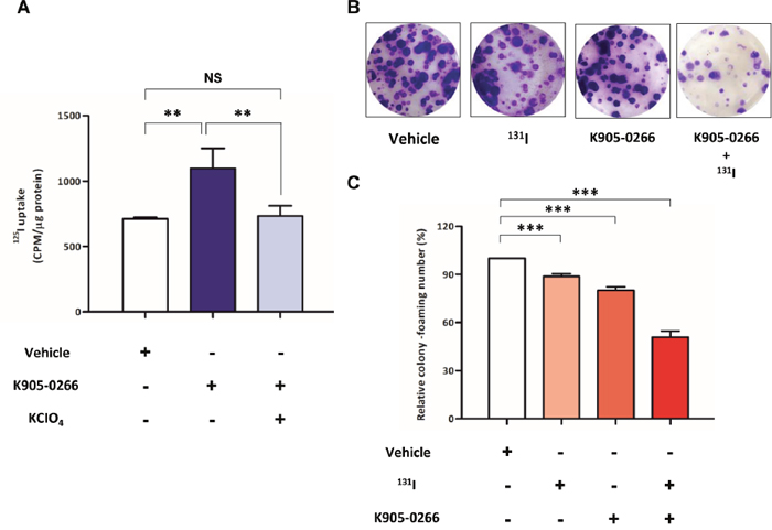 Verification of iodide accumulation ability and cell cytotoxicity by RAI.