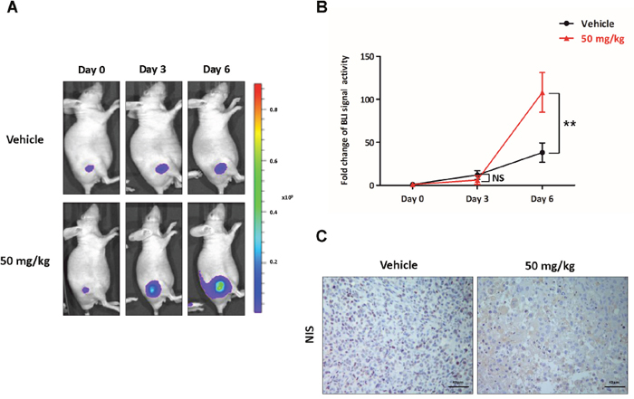 Preclinical evaluation of the functional NIS augmentation following K905-0266 TKI treatment.