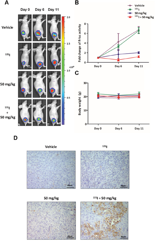 BLI to monitor the therapeutic effects of the combination of 131I and K905-0266 TKI in 8505C-PNIS-PCMV tumour xenograft mice models.