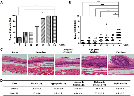 Tumor development in F344 rats treated with NMBA.