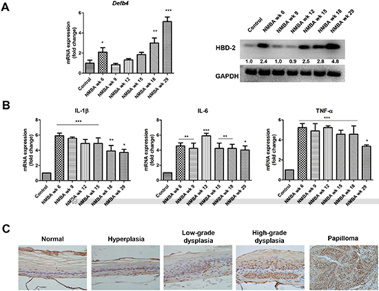 Overexpression of HBD-2 and its associated inflammatory mediators in NMBA-induced rat esophageal carcinogenesis.