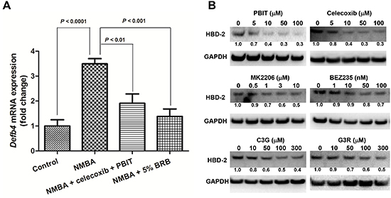 Modulation of HBD-2 by preventive agents for esophageal cancer.