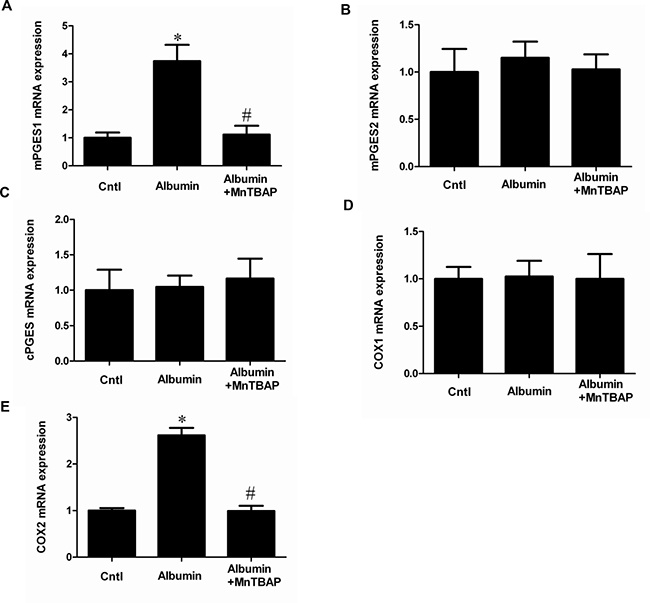 The upregulation of COX-2 and mPGES-1 was revered by MnTBAP at mRNA levels.