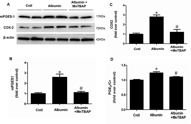 MnTBAP treatment reversed the effects of albumin overload on the protein expressions of COX-2 and mPGES-1 and urinary PGE2 production.