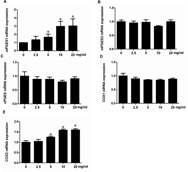 Albumin upregulated the mRNA expressions of COX-2 and mPGES-1 in a dose-dependent manner in mPTCs.