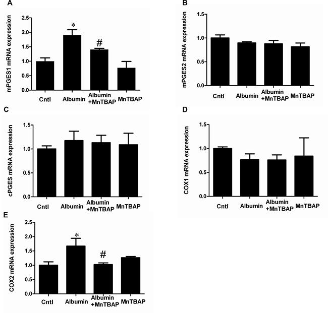 The upregulation of COX-2 and mPGES-1 mRNA expressions was revered by MnTBAP in mPTCs.
