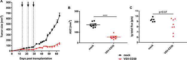 Oncolytic activity in vivo after systemic administration of VSV-CD30.