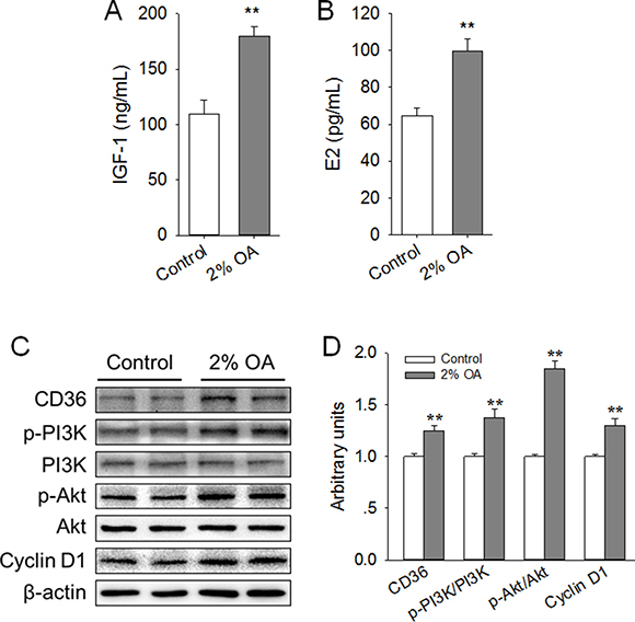 Effects of peripubertal exposure to diet containing 2% OA on the serum level of IGF-1 and E2, expression of CD36 and Cyclin D1, and activation of PI3K/Akt in the right side of the mammary gland of mice.