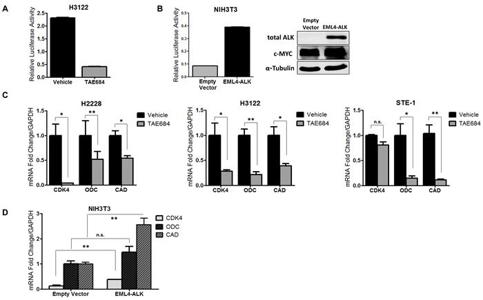 ALK regulates transcriptional activity of c-MYC in