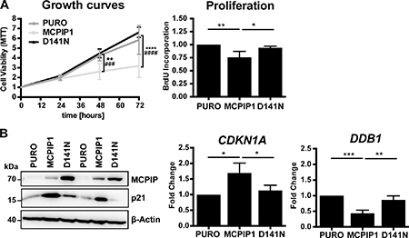 MCPIP1 overexpression decreases growth of Caki-1 cells.