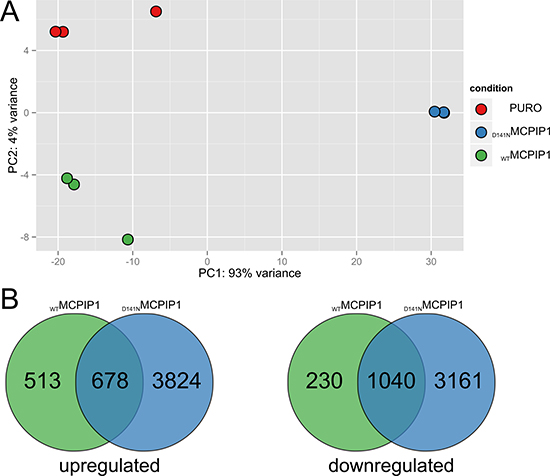 RNA-Seq analysis of global transcriptome changes based on MCPIP1 expression.