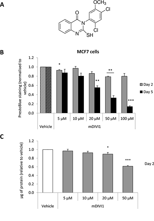 Figure 1. DRP1 inhibition by mDIVI1 reduces MCF7 cell viability.