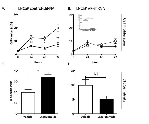 Increased CTL sensitivity by enzalutamide was dependent on AR expression.