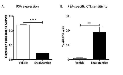 Enzalutamide mediated reduced PSA levels while improving prostate tumor-cell sensitivity to PSA-specific CD8