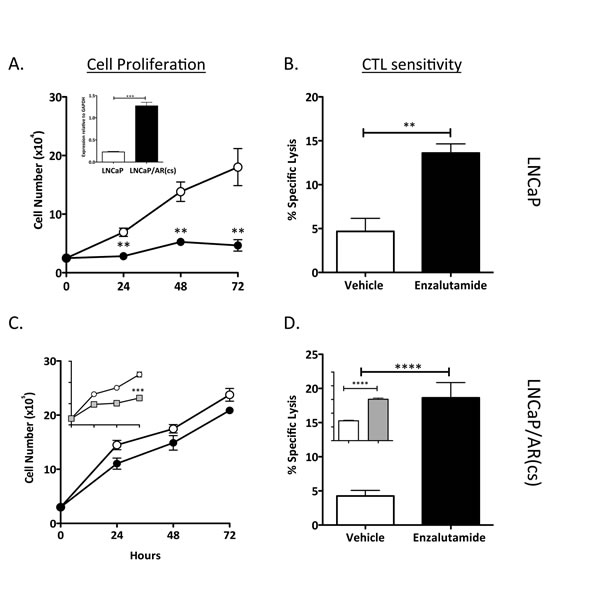 Enzalutamide improved the sensitivity of prostate tumor cells that overexpressed AR to T cell-mediated killing.