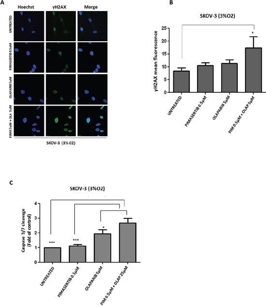Enhanced DNA damage response and cytotoxicity after combination of PARP inhibitor olaparib with MEK inhibitor pimasertib in BRCA2 proficient cell line SKOV-3.