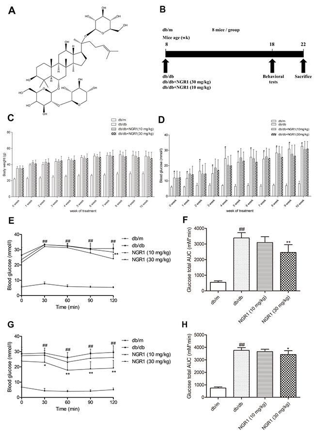 NGR1 improves insulin resistance in db/db mice.