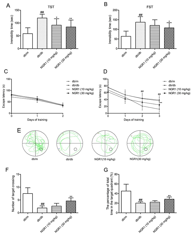 NGR1 attenuates depression-like behaviors and memory impairment in db/db mice.